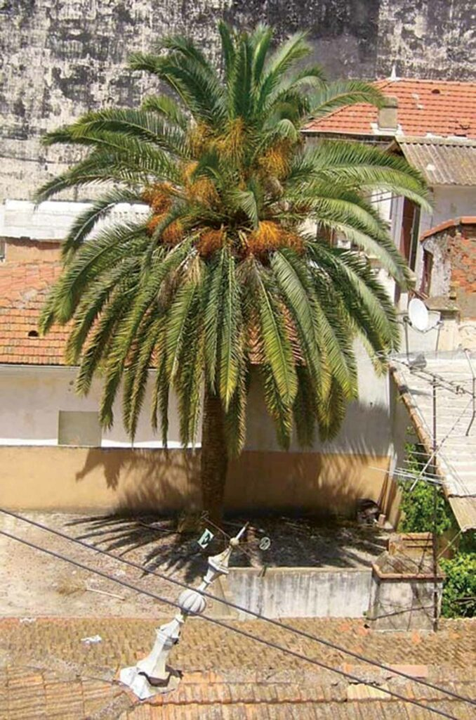 Zineb-Sedira The residency apartment in the centre of Algiers